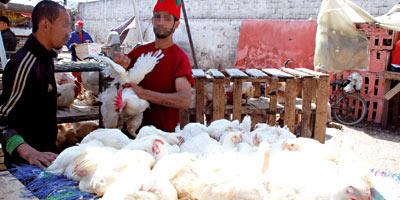 Seulement 8% de la viande de volaille que nous consommons provient des abattoirs agréés !