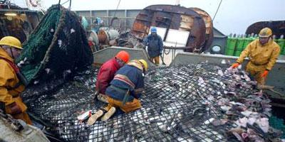 Hausse de 7% des débarquements de la pêche côtière et artisanale à fin novembre 2014