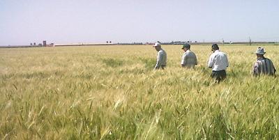 Comment des agriculteurs ont multiplié leurs rendements par trois grà¢ce à l'agrégation