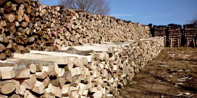 Moyen Atlas : La consommation de bois atteint 10 tonnes par ménage annuellement