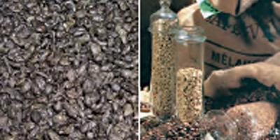 Thé et café : les prix au Maroc ont pris 30 à 40% en un an !
