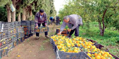 Campagne agricole 2015-2016 :  l'optimisme est de rigueur