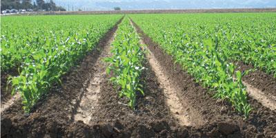 Campagne agricole : l'optimisme retrouvé