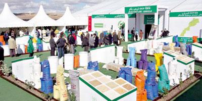Palmiers-dattiers : 1 500 arboriculteurs formés aux bonnes pratiques de fertilisation