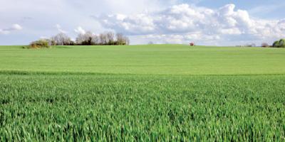 Campagne agricole : évolution très favorable des cultures