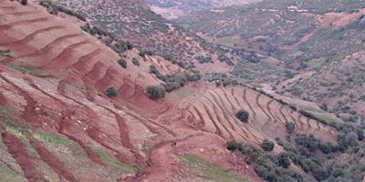 Des millions d'hectares restent non immatriculés au Maroc