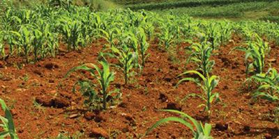 E-commerce : les produits des Â«Domaines agricoles» désormais en ligne