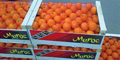 Fruits, légumes frais et produits végétaux transformés : les exportations s'essoufflent