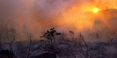 Tanger : Quelque 14 ha de forêt ravagés par le feu dans la commune rurale de Dar Chaoui