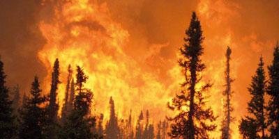 Larache: extinction d'un incendie ayant ravagé environ 6 Ha de végétation