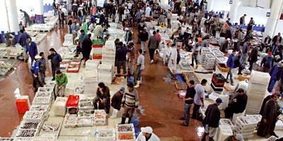 Pourquoi les prix du poisson restent élevés alors que les captures sont en hausse ?