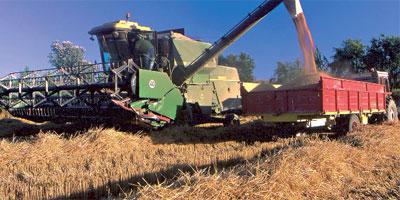 Maroc : La production de céréales atteint 97 millions de quintaux