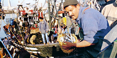 Sardine : 592 000 tonnes débarquées à fin novembre