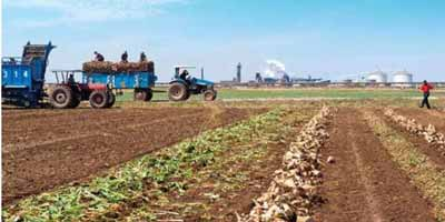 Maroc : 2,7 MMDHS de subventions directes aux agriculteurs au titre de la campagne 2014-2015