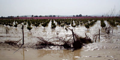 Multirisque climatique : près de 700 000 ha couverts