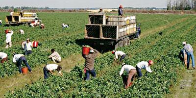 L'ouverture du droit aux allocations familiales a porté le nombre des agriculteurs déclarés de 101 000 à 150 000