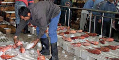 Pêche : 14 halles au poisson sur 18 désormais aux normes sanitaires internationales