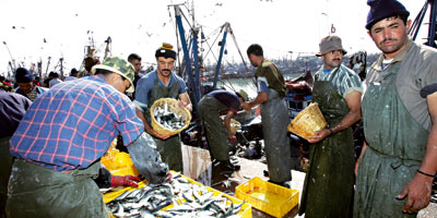 Débarquements de la pêche côtière : Hausse de 6% à fin septembre 2013