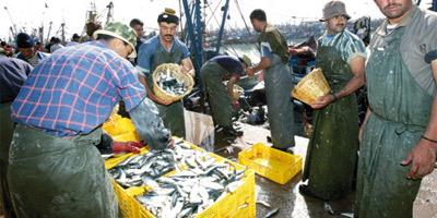 Les conserves de poissons en baisse de 31%
