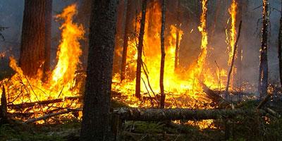 Tanger : 4 Ha de végétation ravagé par un incendie
