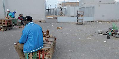 Abattoirs de volailles :  Casa Prestations reprend la gestion