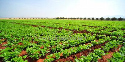 Plus de 95 MDH pour le recensement général de l'agriculture