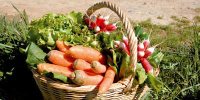 Agriculture bio : 12 500 tonnes labellisées et exportées, 37 500 non labellisées consommées au Maroc