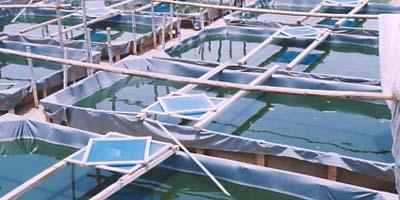 Aquaculture : les appels d'offres pour l'aménagement des zones d'élevage lancés