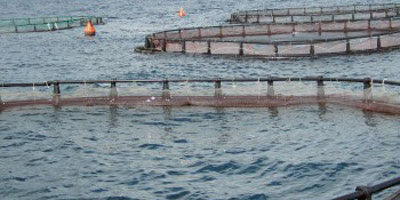 Aquaculture : neuf sites de production identifiés, un investissement de 295 MDH