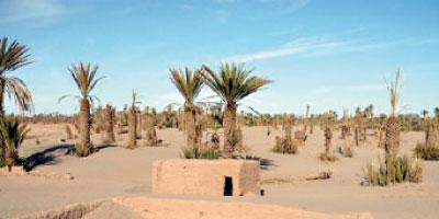 Des arbres pour lutter contre  la désertification