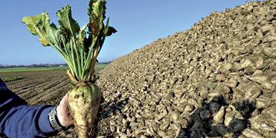Sucre : 40% des besoins couverts par la production locale en 2015