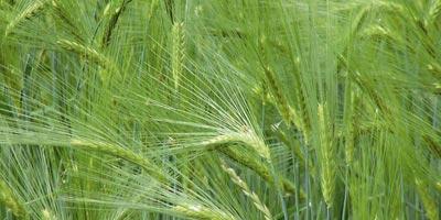 Evolution très favorable de la production de semences depuis 2009