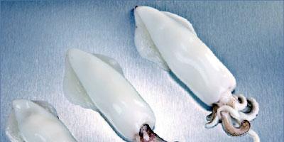 Curos Fred, spécialiste espagnol des produits de la mer semi-préparés, recapitalise sa filiale marocaine