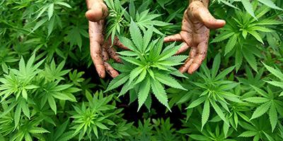 Saisie de 4 tonnes de cannabis près de Ben Guerir