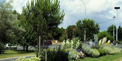 Gestion des espaces verts : l'activité peine à se professionnaliser