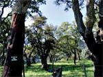 Forêt de la Maà¢mora : 10 000 ha squattés