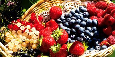 La filière des fruits rouges portée par l'export
