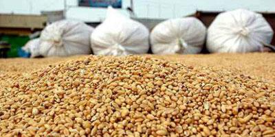 Les droits de douane sur l'importation du blé «seront probablement suspendus» à partir d'octobre