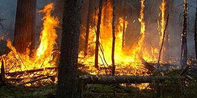 Extinction d'un incendie de forêt ayant ravagé près de 50 ha aux environs de Tétouan
