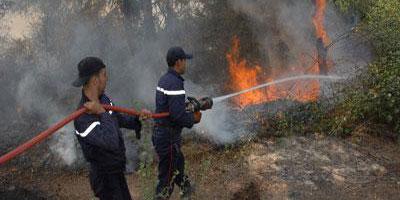 Un feu de forêt maitrisé après avoir ravagé 20 hectares à Tétouan