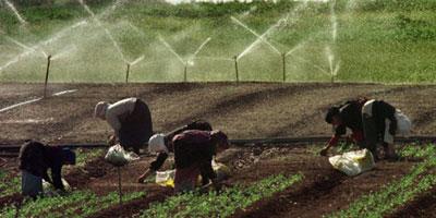 L'agriculture emploie 60% de la main d'oeuvre en Afrique