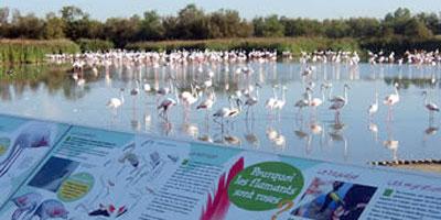 La ville de Fès sera dotée d'un jardin botanique et d'un parc ornithologique