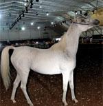 Salon du cheval, la première édition restera dans les mémoires