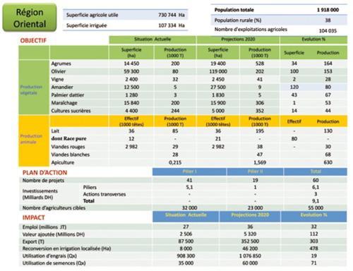 Oriental: 50 000 ha de plus pour l'olivier et 25 000 ha pour l'amandier