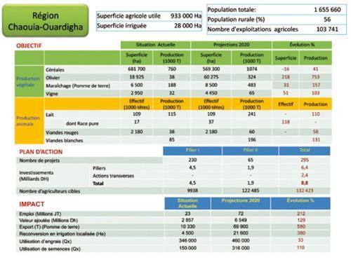 Chaouia: céréales, olivier et aviculture, les moteurs de la région
