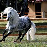 Deuxième édition du Salon du cheval d'El-Jadida : 150 000 visiteurs sont attendus
