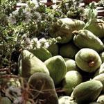 Surproduction, contrebandeÂ…, les cours de l'amande s'effondrent, les agriculteurs s'inquiètent
