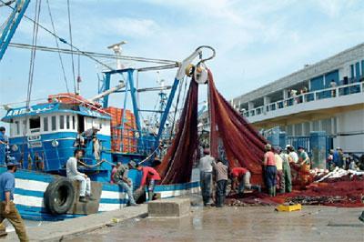 Maroc – Pêche : 13% de plus capturés, mais le montant des ventes est en chute de 5%