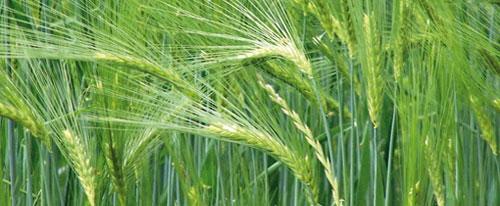 80 millions de quintaux de céréales et une accélération des investissements agricoles