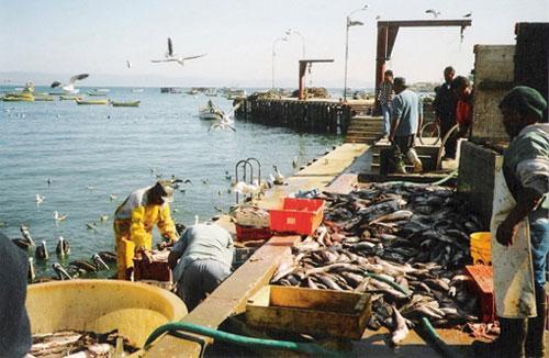Pêche côtière et artisanale : les captures en hausse de 28% au premier trimestre